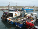 Colourful harbour at Seahouses