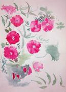 Pink Morning Glory