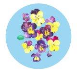 Pansies Circle Print