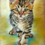 Running Kitten