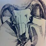 Sheep Skull 1