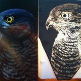 Sparrowhawk On Glass