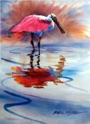 Spoonbill Poster /-Signed Poster (15x20) $30.00/