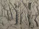 Sessile oak woods at Ynyshir, Ceredigion