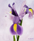 Iris. Size 29 by 24 inches. Oil on board.