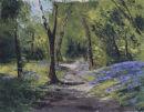 Penrhyncoch Bluebell Woods
