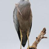 Birds 03 1
