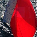 Cape Arrow 24 3