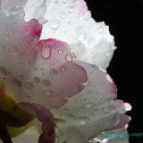 Flowers 074