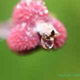 Flowers 088