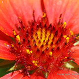 Flowers 084