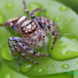 Spider 046 ac