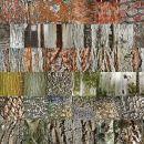 Bark Collage 1