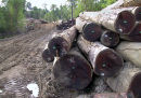 Merbau logs stolen from community