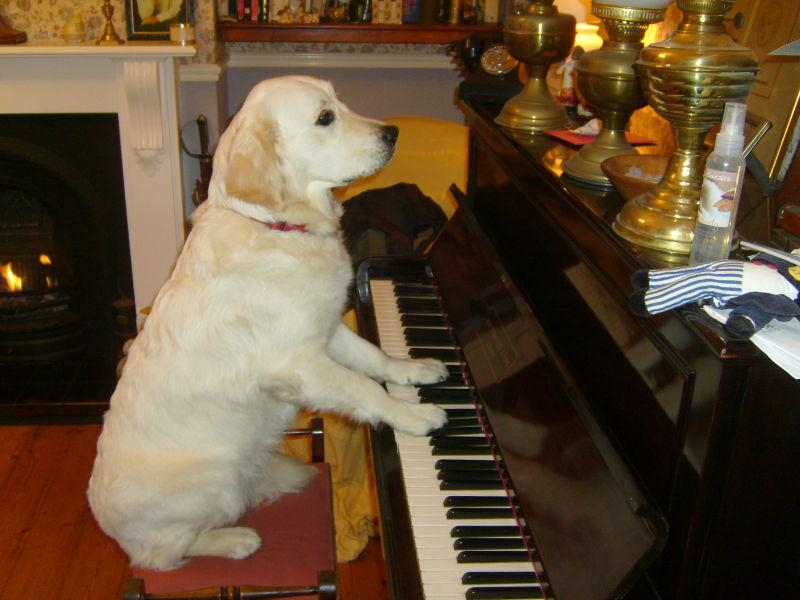 Tula  playing the piano