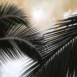 Costa Rica Palm