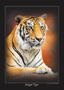 Series 1 - Bengal Tiger