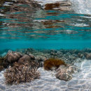 Shallow water coral reflections
