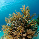 Reef scene