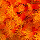 Sun polyps