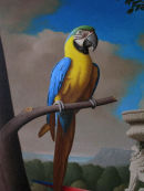 'Yellow &amp; Blue Macaw' Detail from Grand Macaws No.2