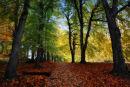 Autumn Colour Mount St. Joseph