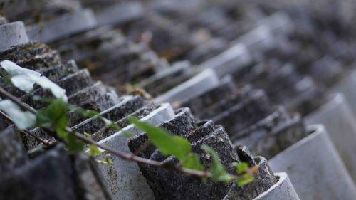 plant particips 4