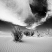 Yucca at White Sands 2